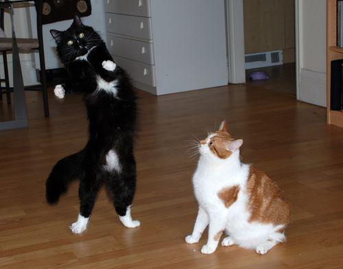 11 Gatti che venivano a ballare, ballare, ballare, ballare