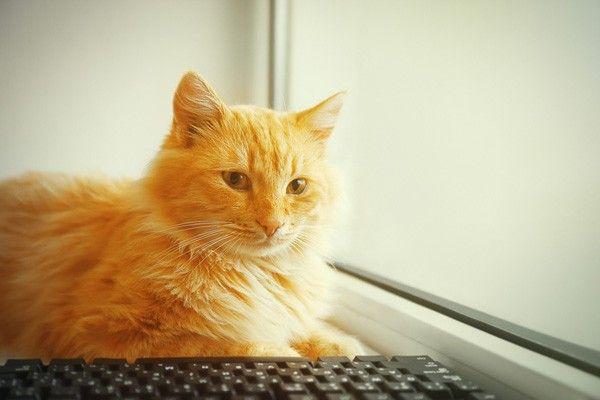 5 Colonne di consigli che i gatti amerebbero scrivere