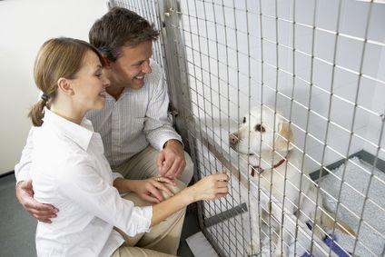 5 Consigli per condurre un test di temperamento cane prima di adottare un rifugio