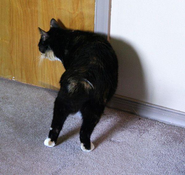 5 Titoli di autobiografie di gatti eccessivamente drammatiche