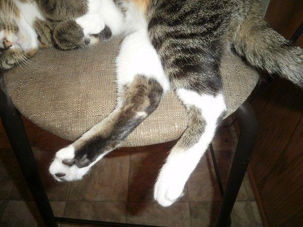 6 Modi in cui le posizioni del corpo dei miei gatti mi uccidono con carino