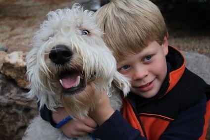 Ragazzo con Labradoodle Poodle Mix Dog