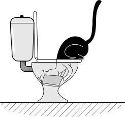 8 Cose che i gatti fanno con la testa nella toilette