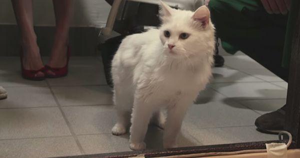 Una banca in Russia ti presta un gatto quando apri un mutuo