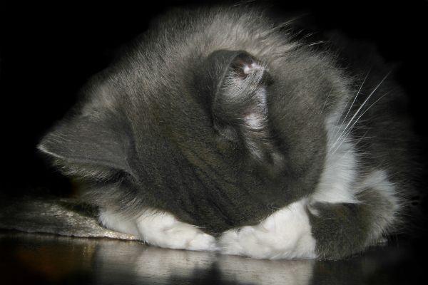 Stiamo oltrepassando i nostri gatti?