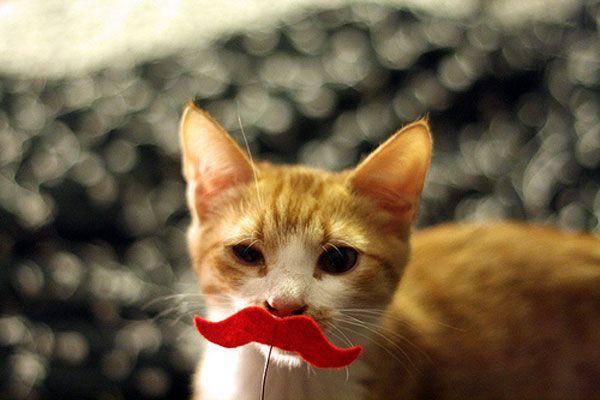 Chiedi a einstein: la nostra nuova rubrica settimanale offre consigli da un gatto