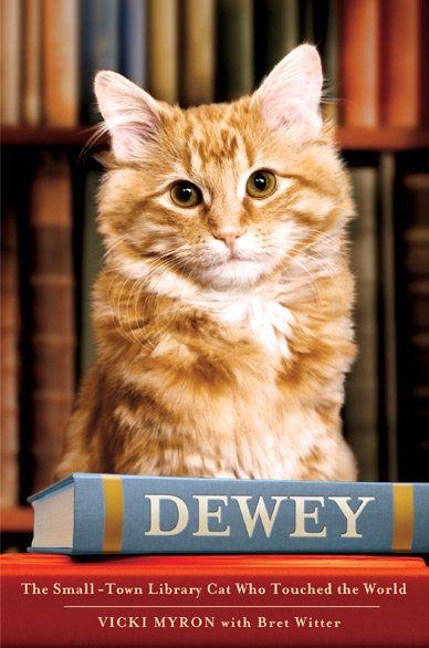Rassegna del libro: Rinnova il gatto della biblioteca della piccola città che ha toccato il mondo