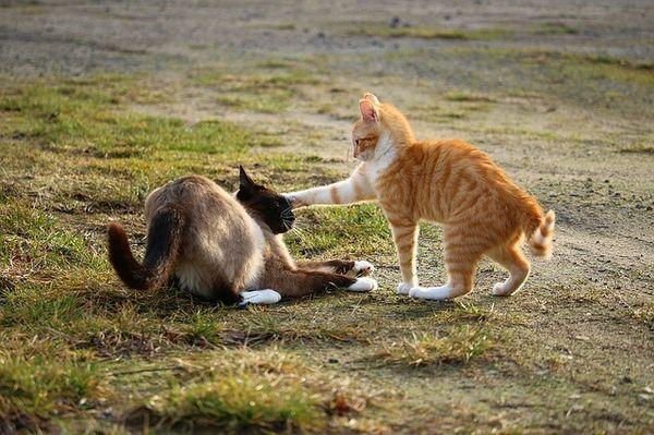 I gatti possono essere bipolari? 6 segni che non mentono