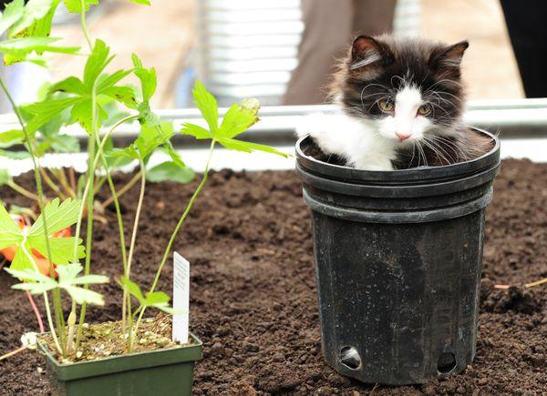 I parchi giochi per gatti sono ormai una cosa - almeno nella società umana toronto