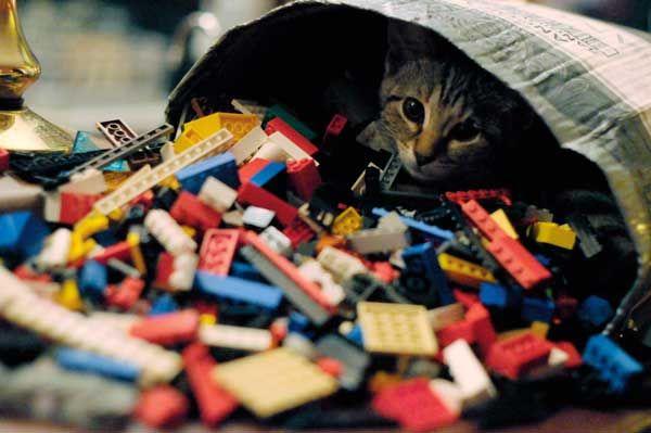 Turismo per gatti: trovare pinte e gattine nei pub in Inghilterra