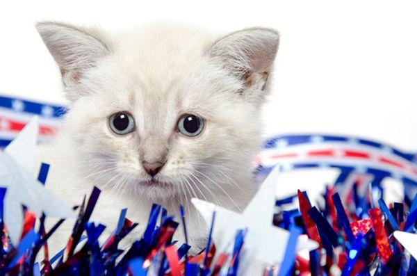 Gatti e fuochi d`artificio: le 5 fasi del dolore