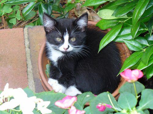 Gatti in vasi di fiori: così fiorenti!