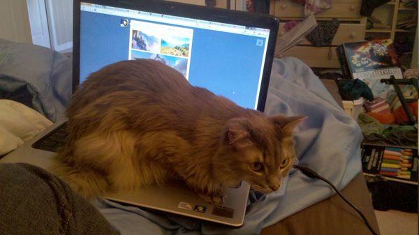 I gatti a cui non appartengono: ora non faremo mai niente!