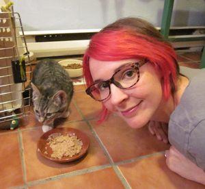 Video originale Catster: cosa fare con i ladri di cibo felini nella tua casa