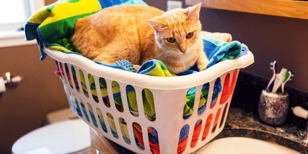 4 Modi di vivere verde avvantaggiano i miei gatti e me stesso