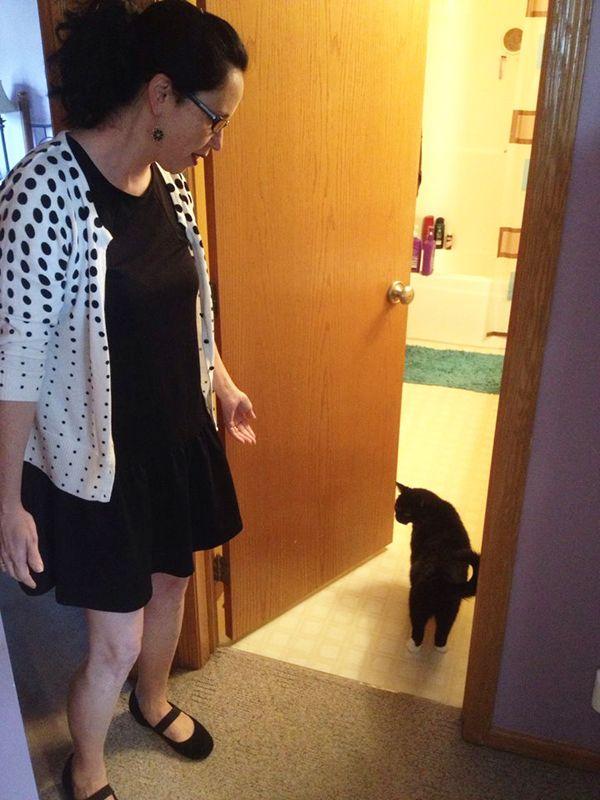 Il mio gatto ha un`amnesia perpetua? Di sicuro si comporta così