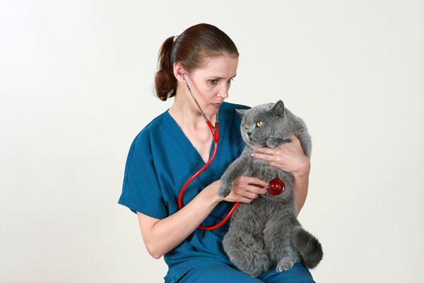 Il tuo veterinario fa visite a domicilio?