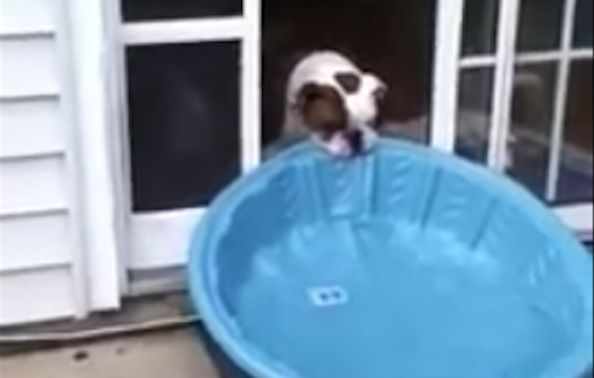 Gus-piscina