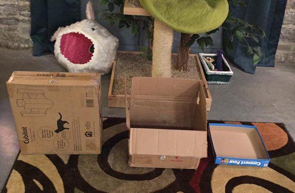 Esperimento: quale scatola di cartone è la preferenza dei miei gatti?