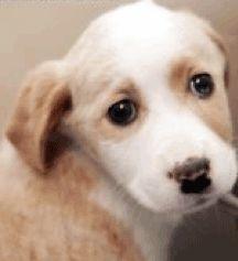 Freekibble.com ha donato il 100% delle crocchette oggi alle vittime degli animali del tornado di Joplin