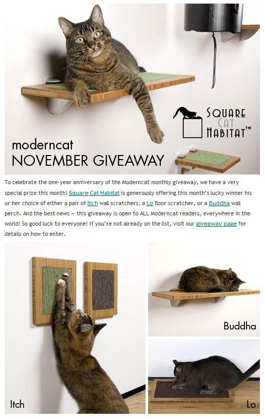 Giveaway: eleganti graffi o pesci persiani dell`habitat del gatto quadrato