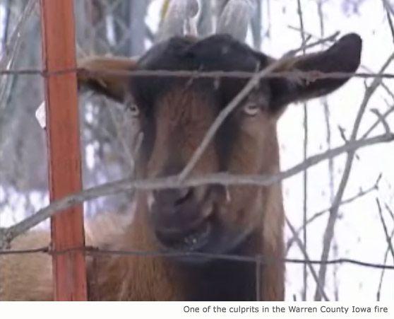 Goat avvia fire-cat salva la giornata