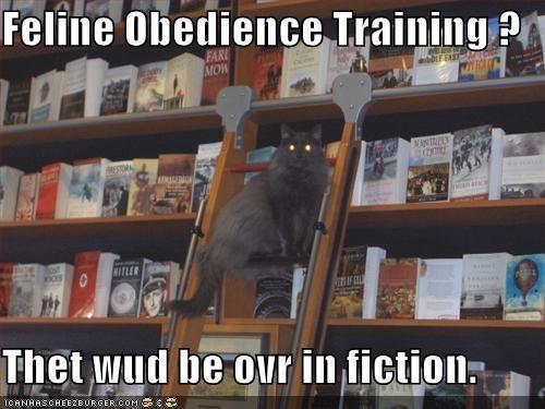 Indovina un po? È sempre il giorno dell`indipendenza per i gatti