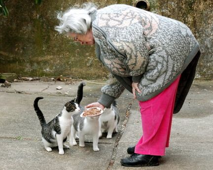 Aiuta i gatti selvatici colpiti duramente dal conte di uragani