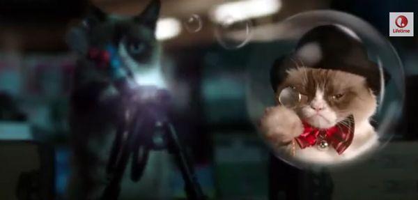 Film di Hollywood con protagonisti i gatti delle celebrità che vorremmo vedere