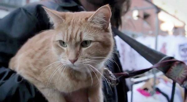 Il memoir del senzatetto london cat è ora in stampa