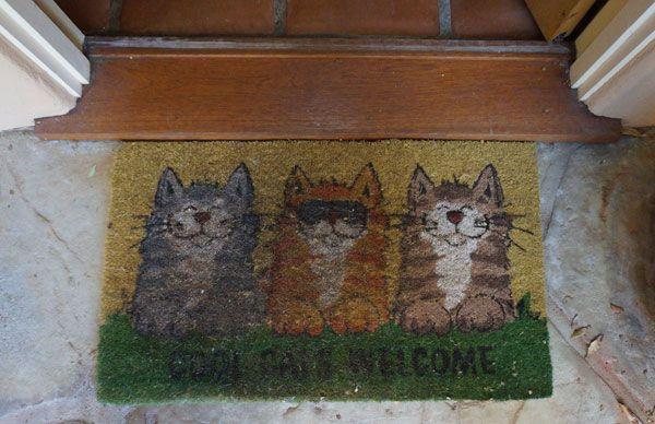 House of nekko: come il mio amico ha fatto della sua casa un paradiso per gatti