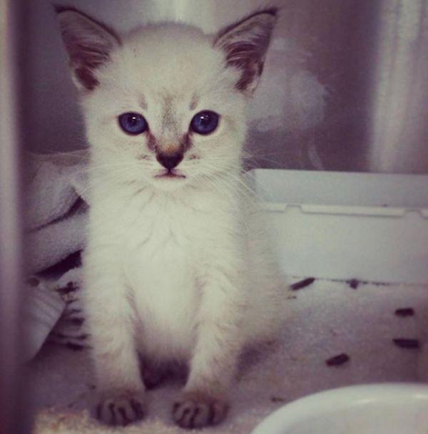 Come il gattino ha ispirato i suoi padroni a salvare i gatti con bisogni speciali