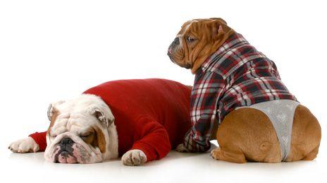 Quanto dura un cane in calore?