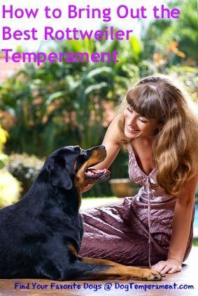 Come far emergere il miglior temperamento del rottweiler