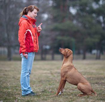 Allevatore che lavora con il suo cane genitore