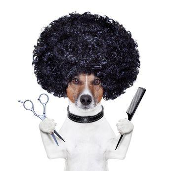Cane bianco con afro pronto per essere curato
