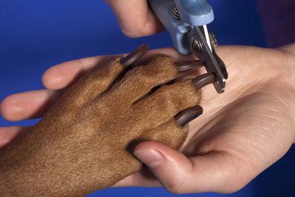 Tagliare unghie per cani