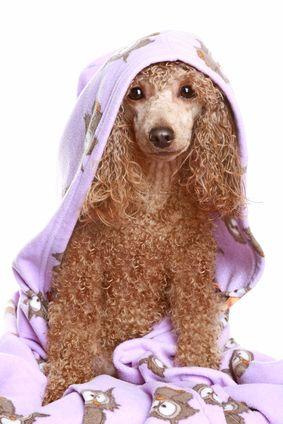 Cane secco dopo il bagno