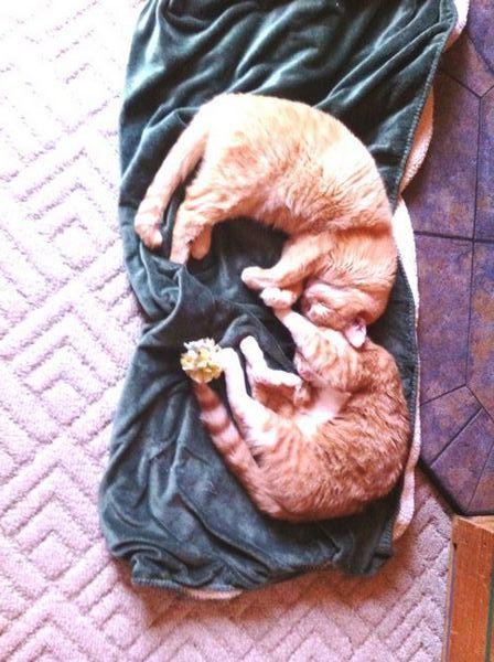 Come trasformare i tuoi amici ambivalenti in amanti dei gatti in buona fede