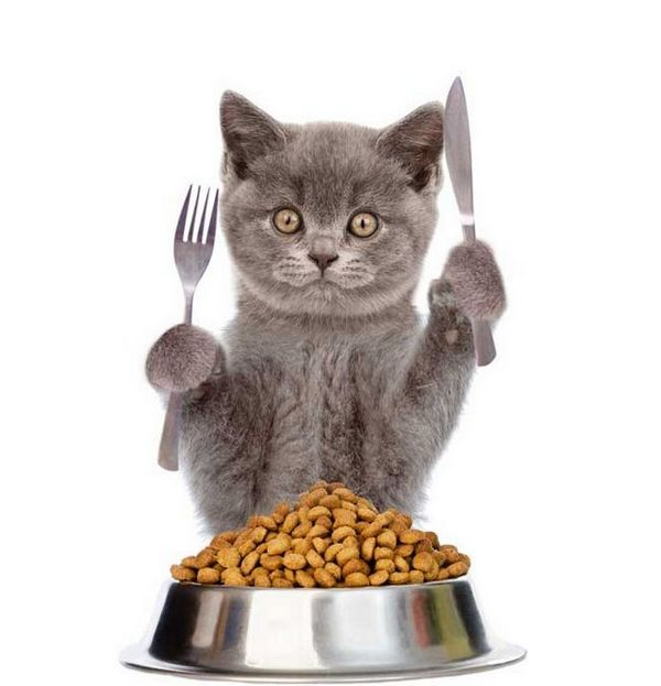 Hypoallergenic Cat Food Get To Know The Facts And Myths