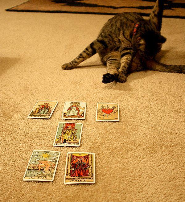 L`amore incondizionato di un gatto: è un mito?