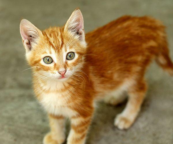 Ho amato il mio primo gatto e l`ho perso a causa del comportamento negligente della mia famiglia