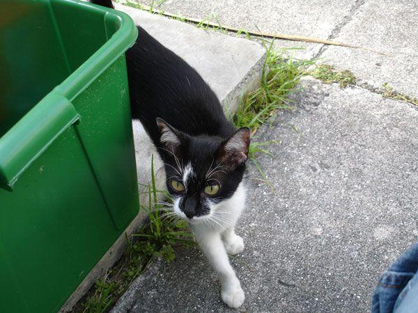 Ho salvato un gattino dalla spazzatura e lei mi ha salvato in cambio