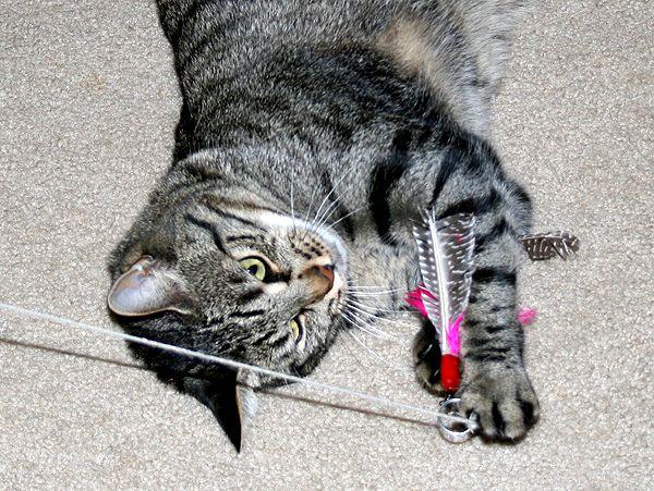 Decido di diventare un migliore proprietario di gatti (e gatto) nel 2014
