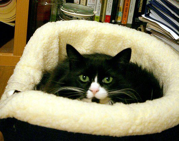 Ho spaventato il bejesus dal mio gatto - per aiutarla