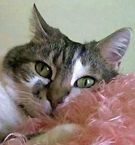 Se sei morto oggi, che cosa succederebbe ai tuoi gatti?