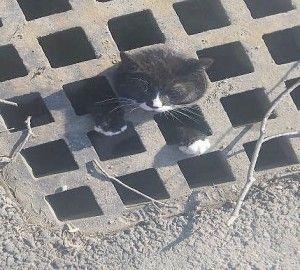 Gattino salvato da un pericolo potenzialmente mortale