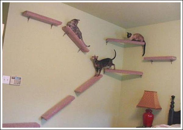 Kitty casa dei sogni