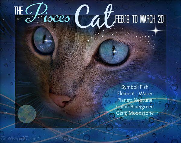 Oroscopo di Kitty: la marcia appartiene al gatto dei Pesci, un dolce paradosso