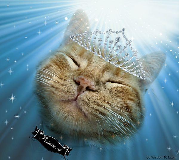 Oroscopo del gattino: l`ottobre appartiene all`adorabile gatto della libra